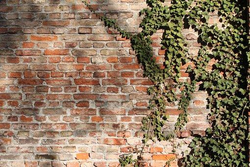 Brick Wall, Bricks, Wall, Bricked, Ivy, Climber