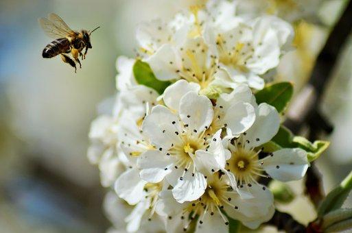 Flowers, Flowering Tree, Tree, Nature, Cherry, Spring