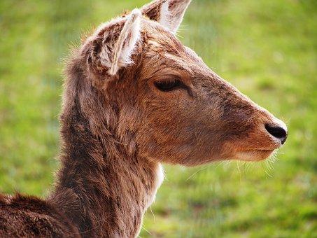 Roe Deer, Ungulate, Close, Paarhufer, Rehfuss, Foot