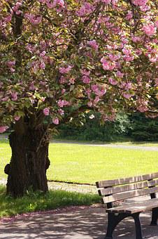 Leipzig, Southern Cemetery, Tree, Flowers, Pink, Bank