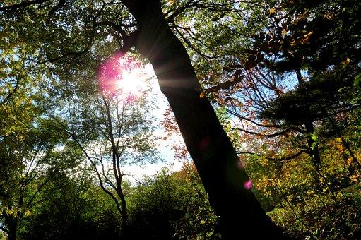 Tree, Sun, Sunshine, Forest, Canada, Parc, Sunset
