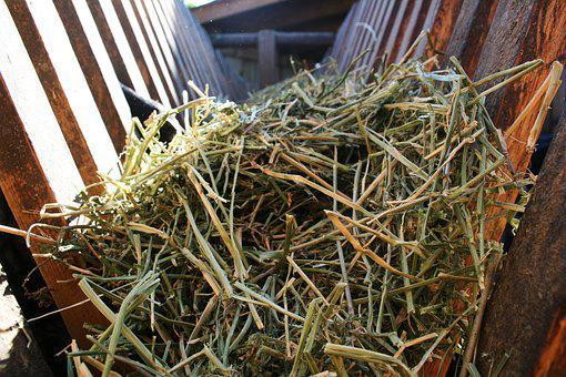 Hay, Contributed, Pet Food, Dry Grass, Land