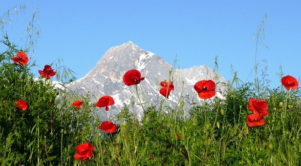 Poppies, Mountain, Italy, Abruzzo, Appennines