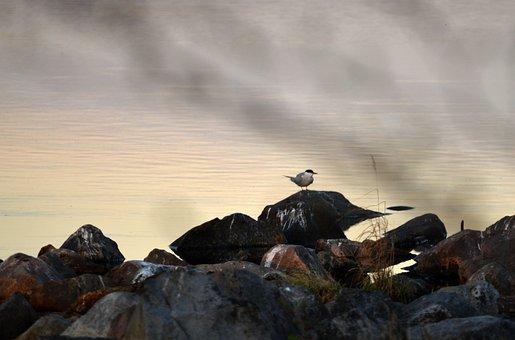 Lake, Stones, Bird, Nature, Stone, Water, Summer, Coast