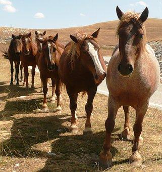 Horses, Animal, Horse, Countryside, Queue, Abruzzo