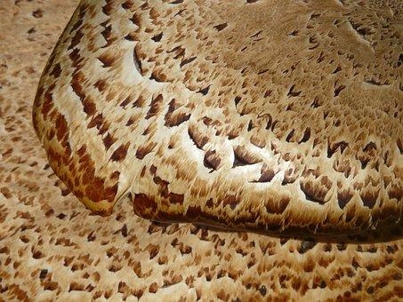 Mushroom, Tree Fungus, Scale, Polyporus Squamosus Stalk