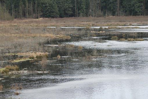 Lagoon, Nature, Slough, Water, Vancouver