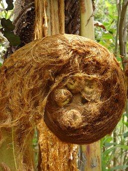 Tree Fern, Plant, Hawaii, Trees, Exotic, Volcano Park