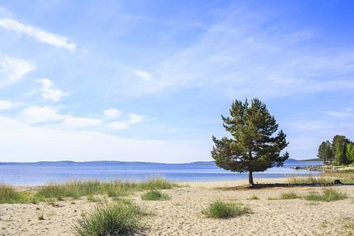 Tree, Beach, örnsköldsvik, Coastal, Sea, Sweden, Water