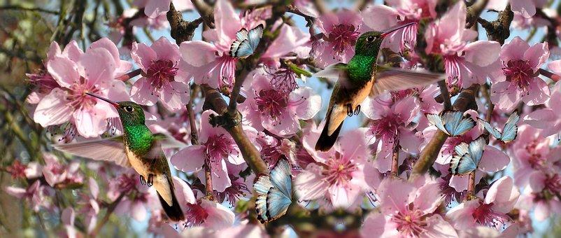 Flowers, Birds, Beija Flor, Butterfly, Bird, Nature