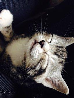 Kitten, Sleepy, Cute, Cat, Kitty, Young, Asleep