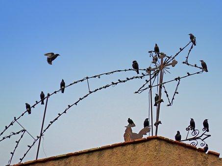 Birds, Starlings, Christmas Star, Veleta, Bell Tower