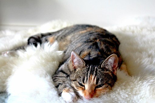 Cat, Tabby, Kitty, Feline, Animal, Young, Pet, Fur