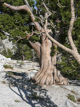 Gnarled, Knotty, Snagged, Tree, Dry, Nature, Rock