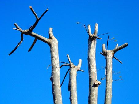 Tree, Trunk, Branches, Tree Trunk, Spring, Sprout