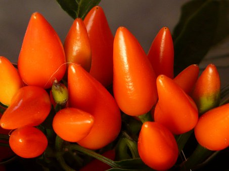 Peppers, Pods, Orange, Bright, Ornamental Peppers