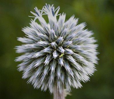Macro, Flower, Flora, Nature, Purple, Flowers, Blossom