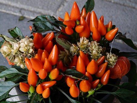 Ornamental Peppers, Paprika, Pod, Peppers, Orange