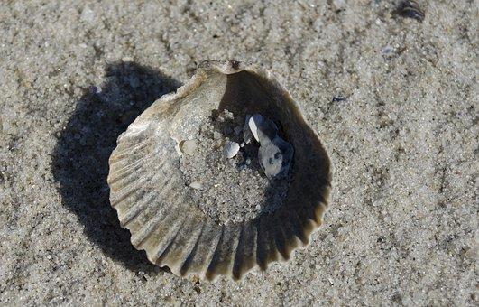 Seashell, Sand, Beach, Ocean, Shell, Summer, Vacation