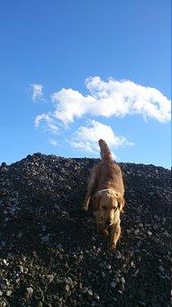 Dog, Cute, Cloud, Sunny, Animal, Play, Light Brown