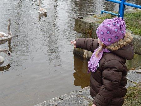 Pleasure, Feeding, Swans, Child, Baby Girl, Adelka