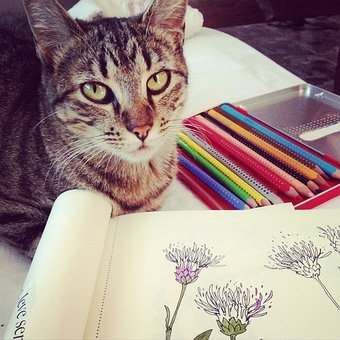 Cat, Coloring, Drawing, Hobby, Do It Yourself, Pet