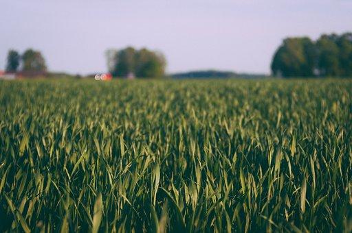 Countryside, Crop, Cropland, Farm, Farmland, Field