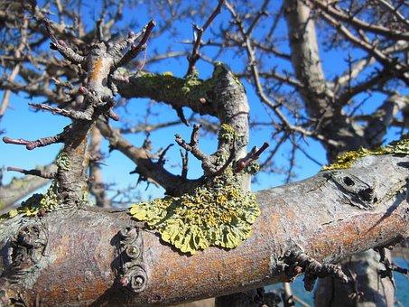 Lichens, Lichen, Lichen On Branches, Close-up