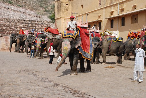 Jaipur, Fort, Elephants, Rajasthan, Pachyderm, India