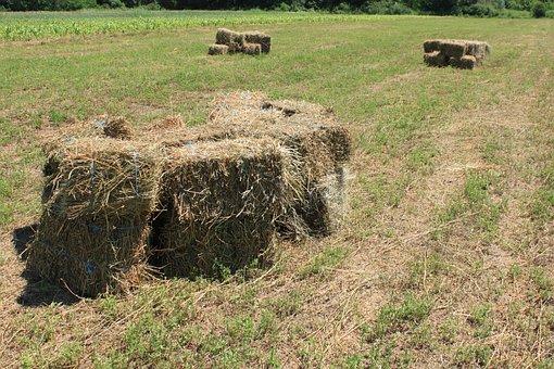 Agriculture, Alfalfa, Bales, Square, Stubble
