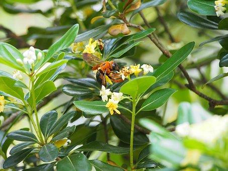 Bumblebee, Adopt Honey, Park