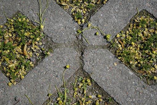 Grass, Bricks, Tick