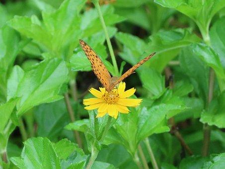 Butterfly, Adopt Honey, Flower, Yellow Flower