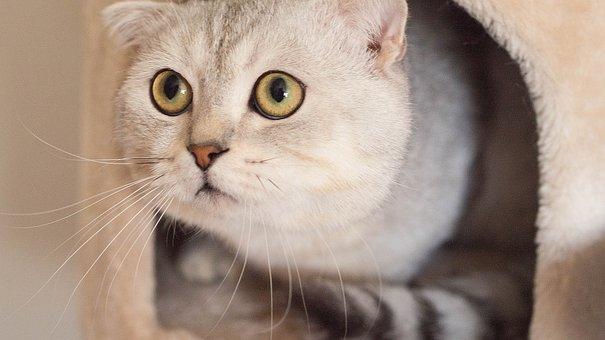 Cat, Pet, Animal, White, Cute, Kitten, Cute Cat, Kitty
