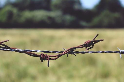 Barbed Wire, Fence, Metal, Wire, Thorn, Limit, Wiring
