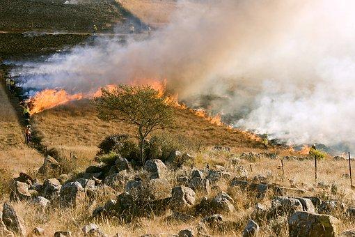 Grass Fire, Firefighter, Smoke, Preventive Burning