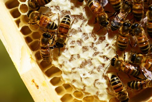 Honeycombes, Bees, Honey, Honey Bees, Honeycomb