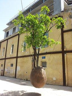 Israel, Tel Aviv, Jaffa, Tree, Pot, In The Air