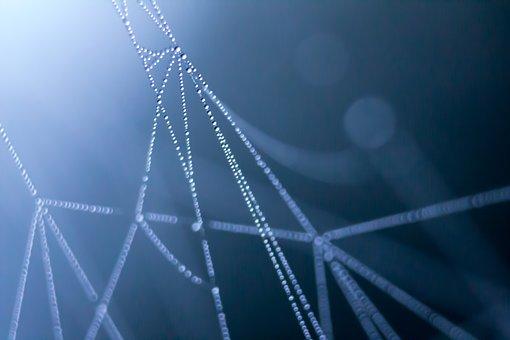 Spiderweb, Morning Dew, Waterdrop, Dark, Morning