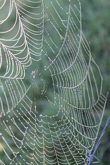 Web, Spider, Dew, Nature, Morning, Spider Web, Drop