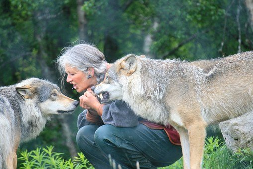 Wolf, Nature, Farm, Woman, Risk, Training