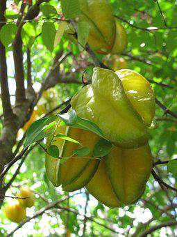 Star Fruit, Plant, Tropical, Nature, Tree, Exotic