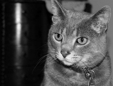 Feline, Rescue, Cat, Domestic, Animal, Kitten, Shelter