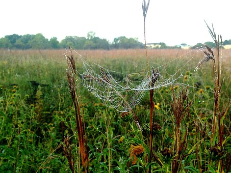 Spiderweb, Dew, Prairie, Web, Spider, Wet, Thread