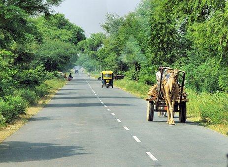 India, Travel, Transport, Rajasthan, Dromedary