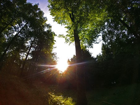 Sun, Backlighting, Nature, Silhouettes, Trees, Setting
