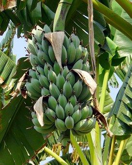 Banana, Wild Banana, Tropical, Plant, Fruit, Food