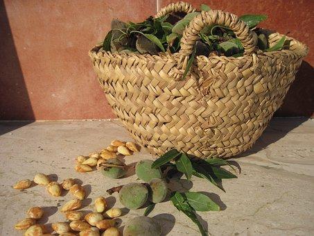 Almonds, Frisch, Fresh Almonds, Edible, Nuclear, Sweet