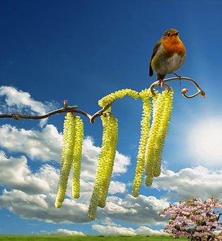 Spring, Spring Awakening, Blossom, Bloom, Robin
