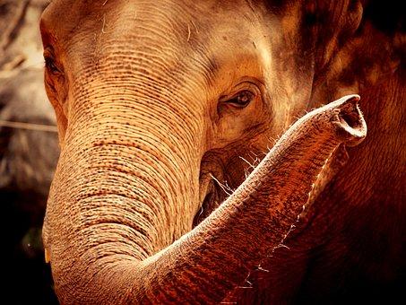 African, Aged, Animal, Big, Black, Brown, Close
